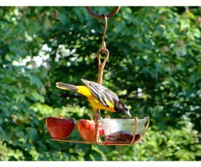 sehhfrjl - Wild Bird Depot Fruit & Jelly/Mealworm Oriole Bird Feeder