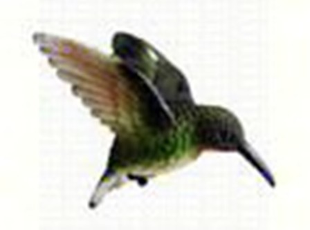 CC52033 - Window Fly Through Bird Magnet Ruby Throated Hummingbird Ornament