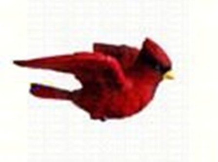 CC52020 - Fly Through Window Bird Magnet Cardinal Ornament