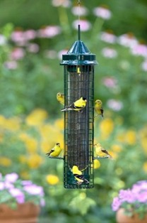 bd1016 - Squirrel Buster Squirrel Proof Finch Feeder