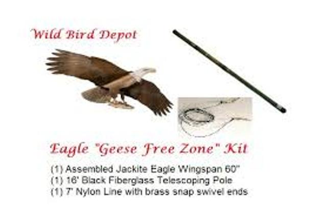 Jackite Eagle
