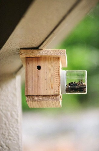 BEESST - Carpenter Bee Trap Hanging Bees N Things